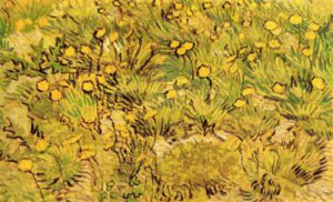 1428786755_a-field-of-yellow-flowers.jpg