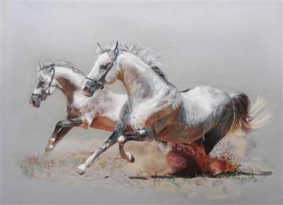 1429113219_horses-belye-loshadi.jpg