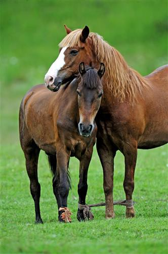 1429113314_horses.-associated-with-love-losh.jpg