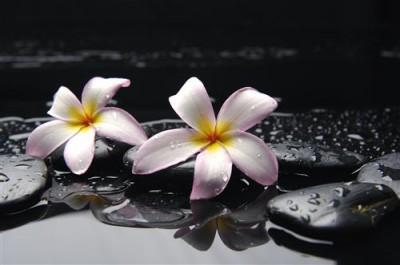 1429116365_flowers-cvety-na-chernyh-kamnyah.jpg