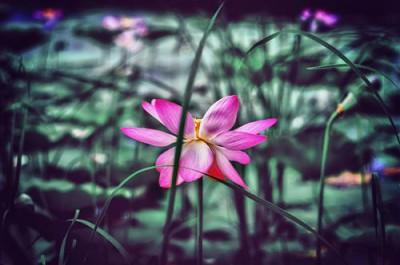 1429116630_nelumbo-lotos.jpg