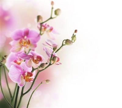 1429117066_orhidei.jpg